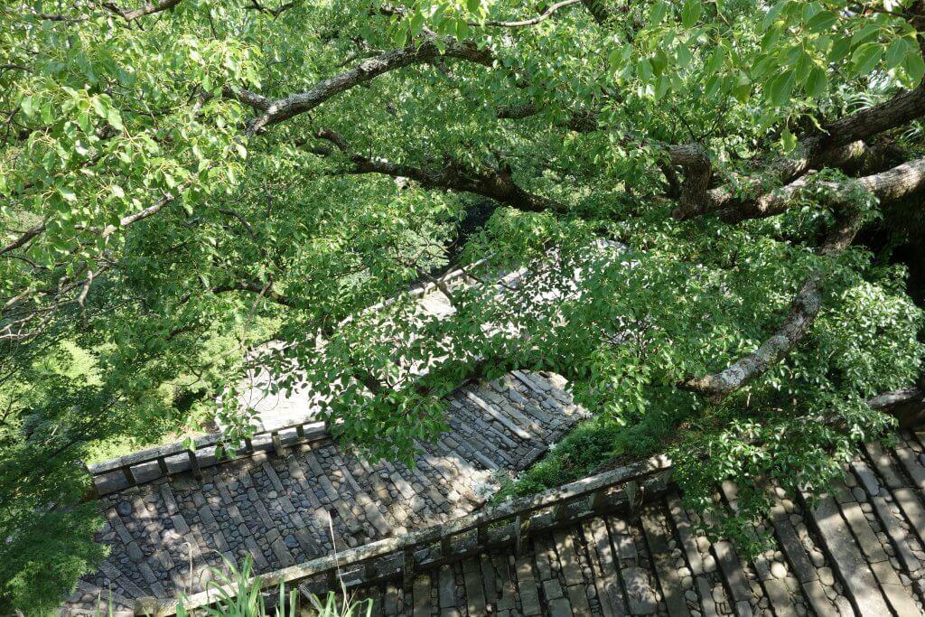 (写真}表参道の石段