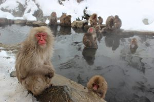 snow-monkeys-1394883