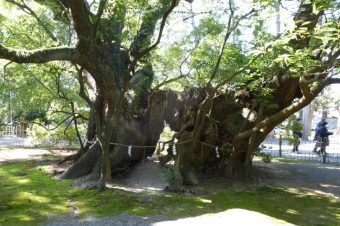 Exploring the Hamamatsu Hachimangu Shrine